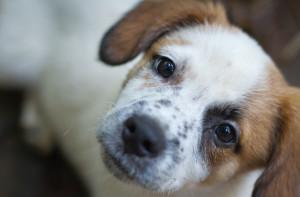 terrier mutt