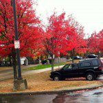 Somerville trees in autumn