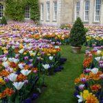 tulip.house