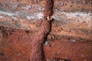 termites above ground