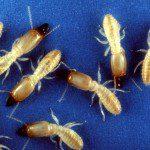 termites in sunlight