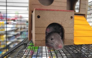 mice in toy house